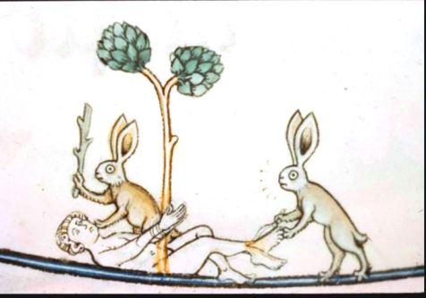 6-bunnies