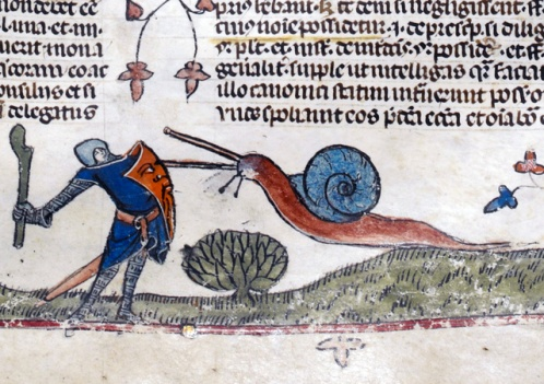 -7-snail
