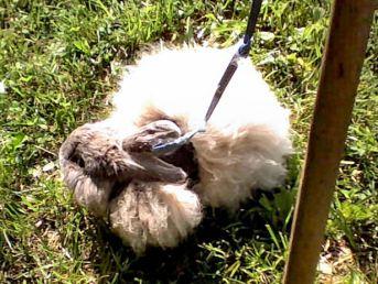 NOWM19-Rabbit Fizzgig