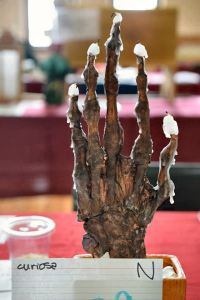 Hand of Glory by Lady Maggie Rue, Photo by Master Fridrikr Tomasson.