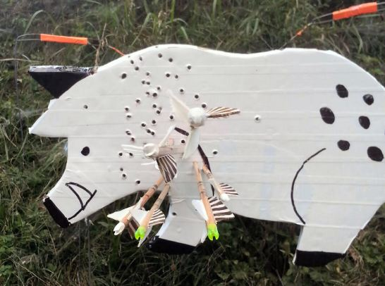 pig shot with arrows